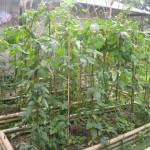 Nabaheng Eigen groenten verbouwen
