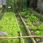 Nabaheng Groenten geplant